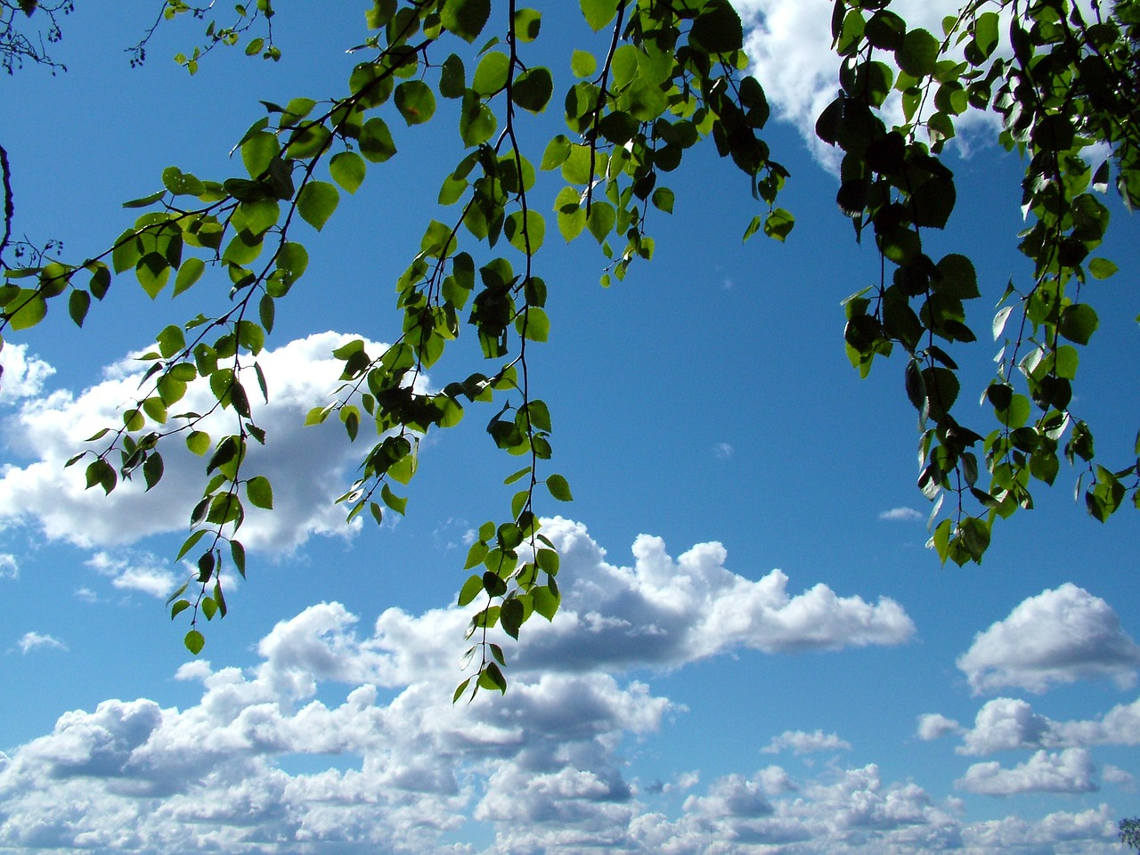обои на рабочий стол небо облака и березы в апреле русских классиков
