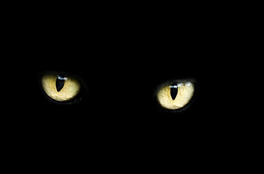Eyes Cat Halloween Black Luck Bad Dark Ani