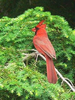 赤羽 写真 - 無料イメージのダウンロード - Pixabay
