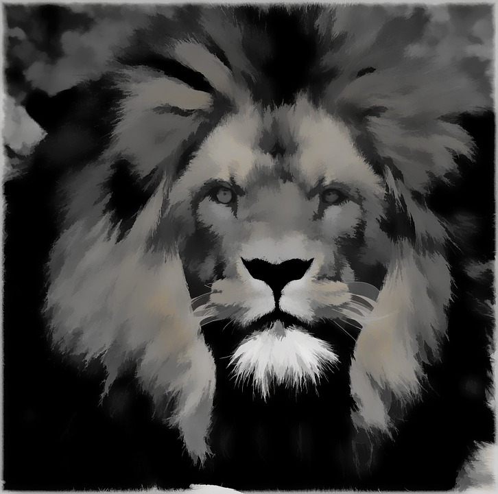 Painting Black And White Digital Art Lion Cat