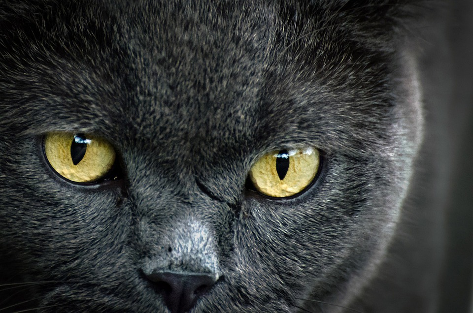Hnědé kočička fotky