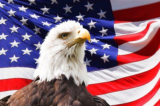 Eagle, America, Flag, Bird, Symbol