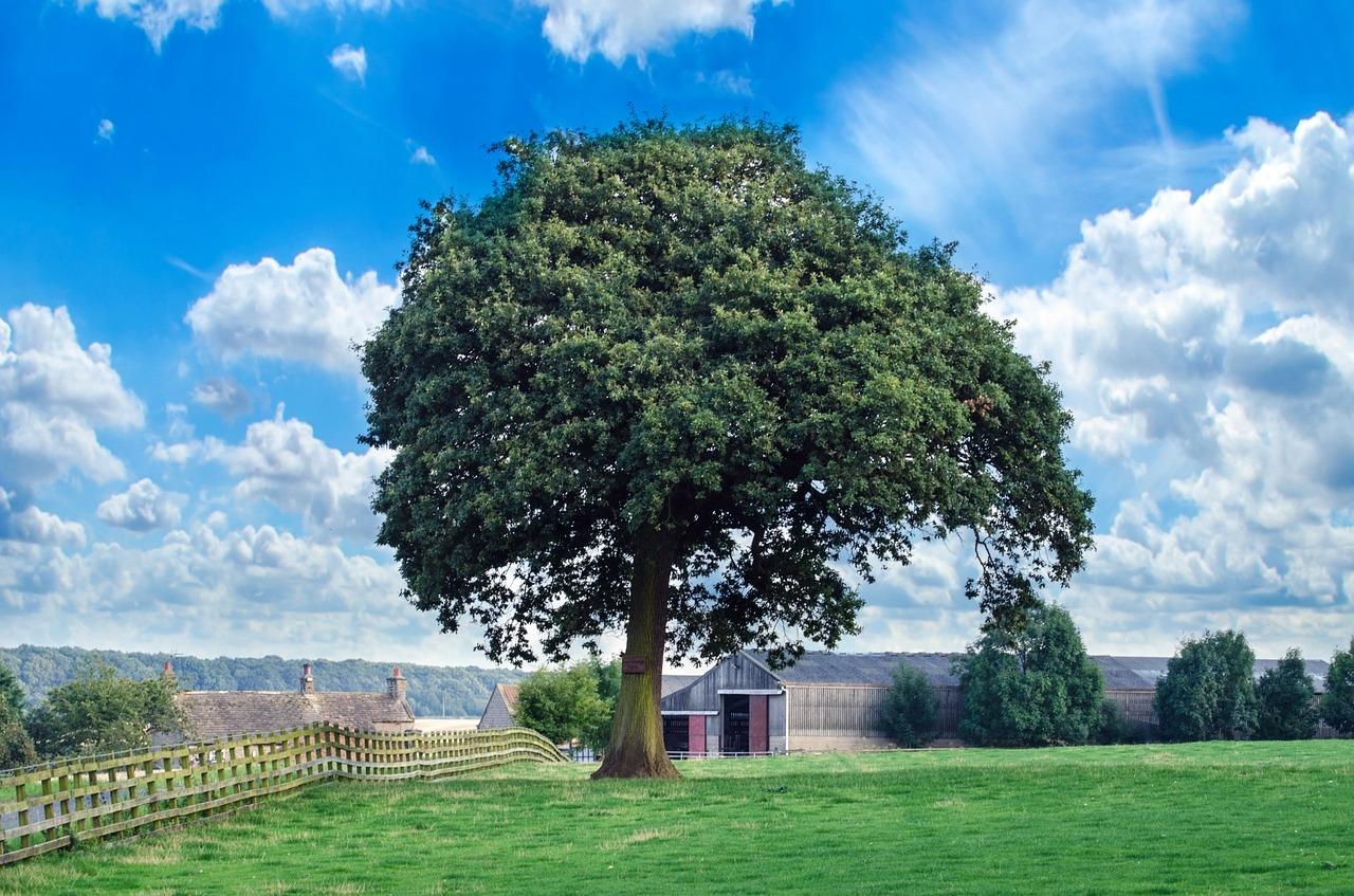 картинки зеленое дерево