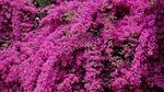 creeper, flowers, bright
