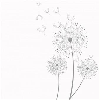 Pissenlit Images Pixabay Telechargez Des Images Gratuites