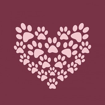 2 000 Of The Best Free Cute Background Images Hd Pixabay