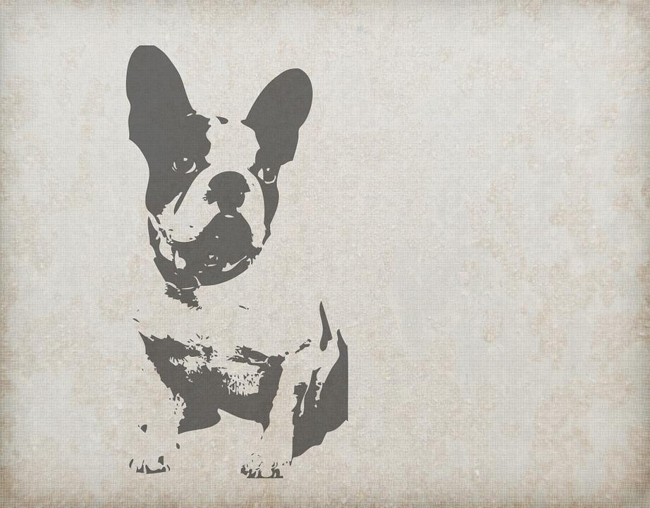 Free illustration: Dog, French Bulldog, Animal - Free ...