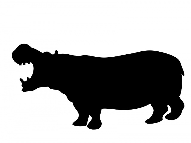 hippo hippopotamus animal  u00b7 free image on pixabay