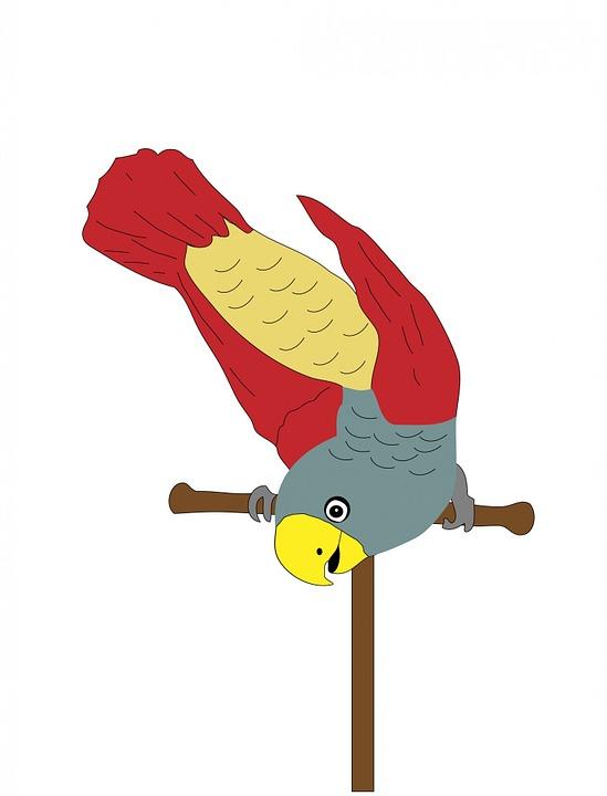 Parrot Bird Animal Free Image On Pixabay