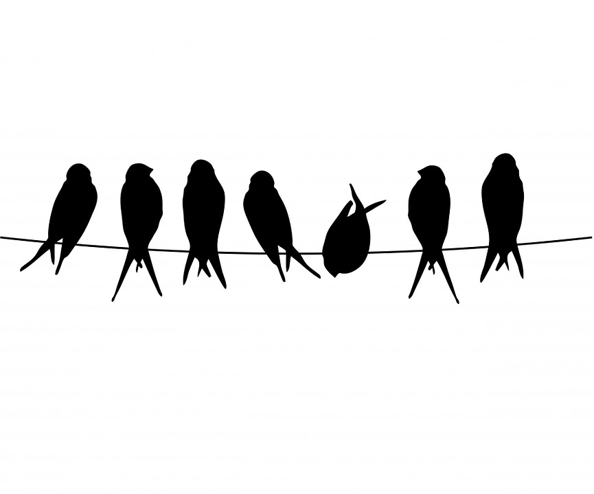 Bird on a wire template - photo#32