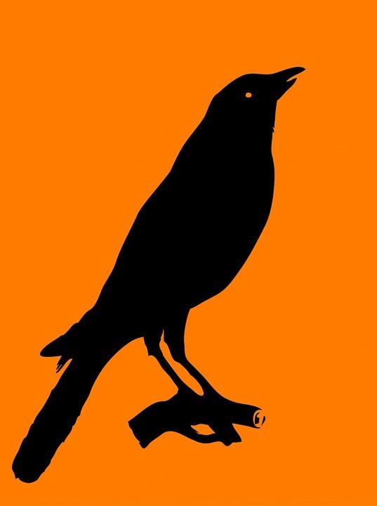 9300 Koleksi Gambar Siluet Hewan Burung Gratis Terbaik