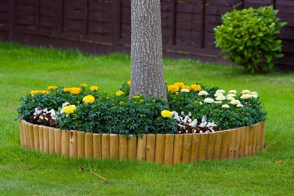 flores para jardim horizontalFoto gratis Flor, Flores, Jardim
