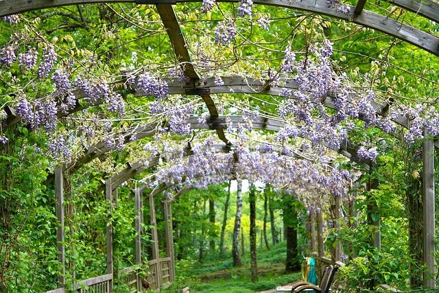 Wisteria Flowers Flowering 183 Free Photo On Pixabay