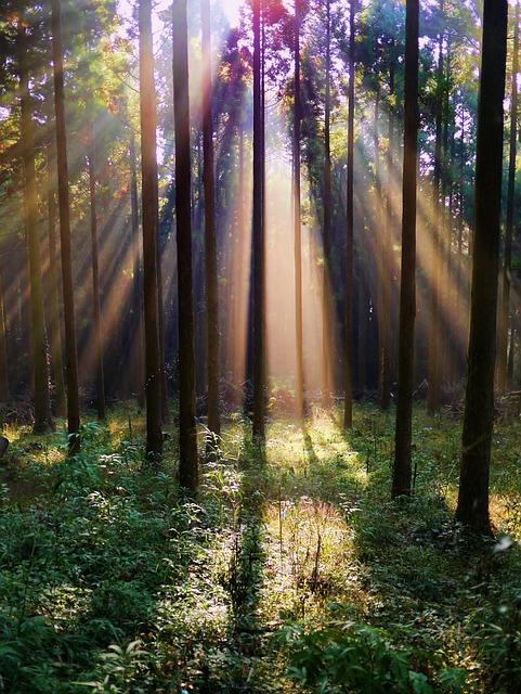 Free photo: Forest, Arboretum, Mountain, Woods - Free ...
