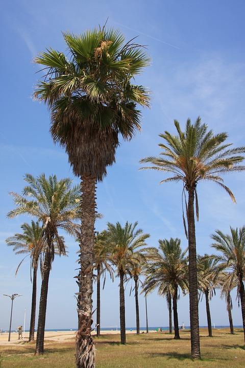 Valencia, Malvarrosa Strand, Palmen, Strand, Costa