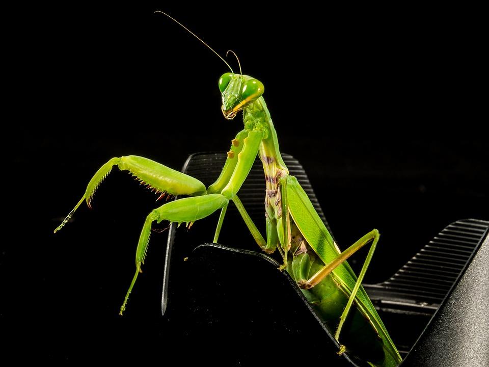 free photo praying mantis  fishing locust free image on pixabay 221000 praying for you free clip art praying for you clipart black and white
