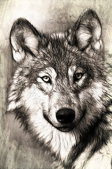 Wolf, Portrait, Head, Predator, Canidae