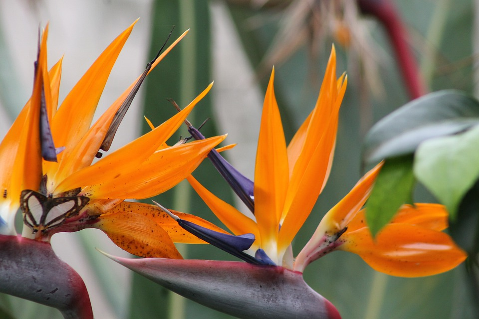 bird of paradise images pixabay download free pictures