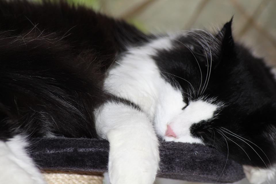 Dometic Medium Hair Cat