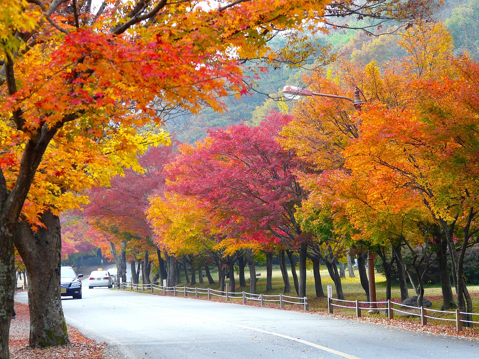 Free Photo Autumn Season Colorful Leaves Free Image On