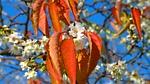 november, autumn