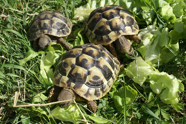 Free Photo Turtle Greek Turtles Turtles Free Image On
