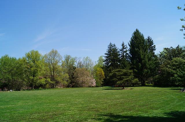Park Yard Trees Free Photo On Pixabay