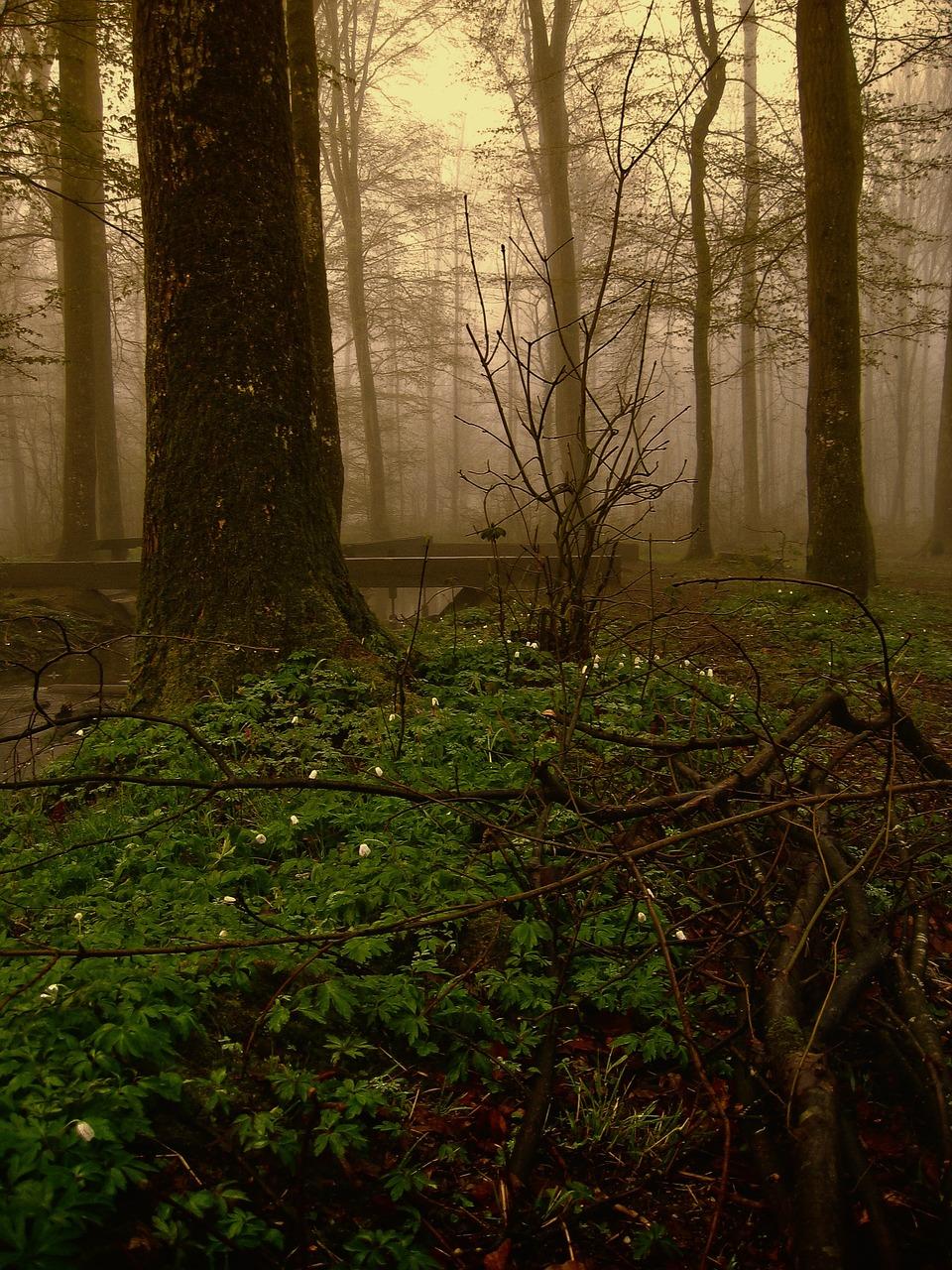 картинки призрачного леса этом рынке