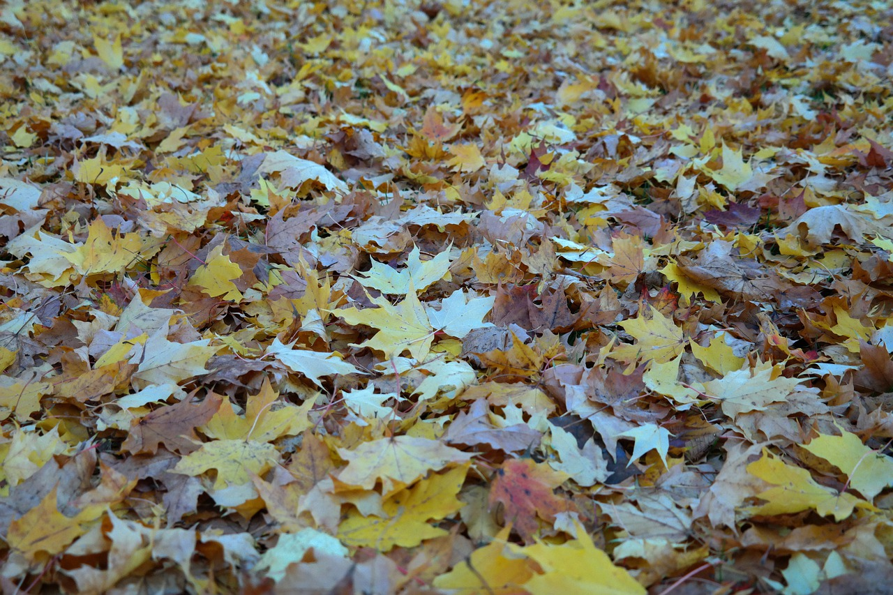 картинка листья кружиться платье, бриллианты настоящая