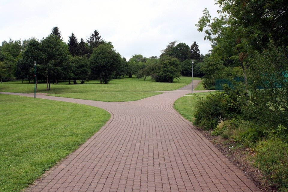 離れた, 道路, 公園, 木, フォーク, 道路の分岐点, ジャンクション, 孤独な