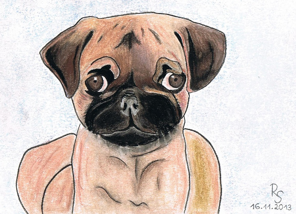 how to draw a pug head