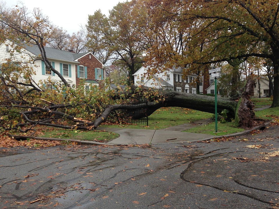 Fallen, Tree, Sandy, Hurricane, Hurricane Sandy, Damage