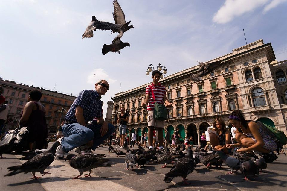 Tauben, Marktplatz, Mailand, Vögel, Federn, Flügel