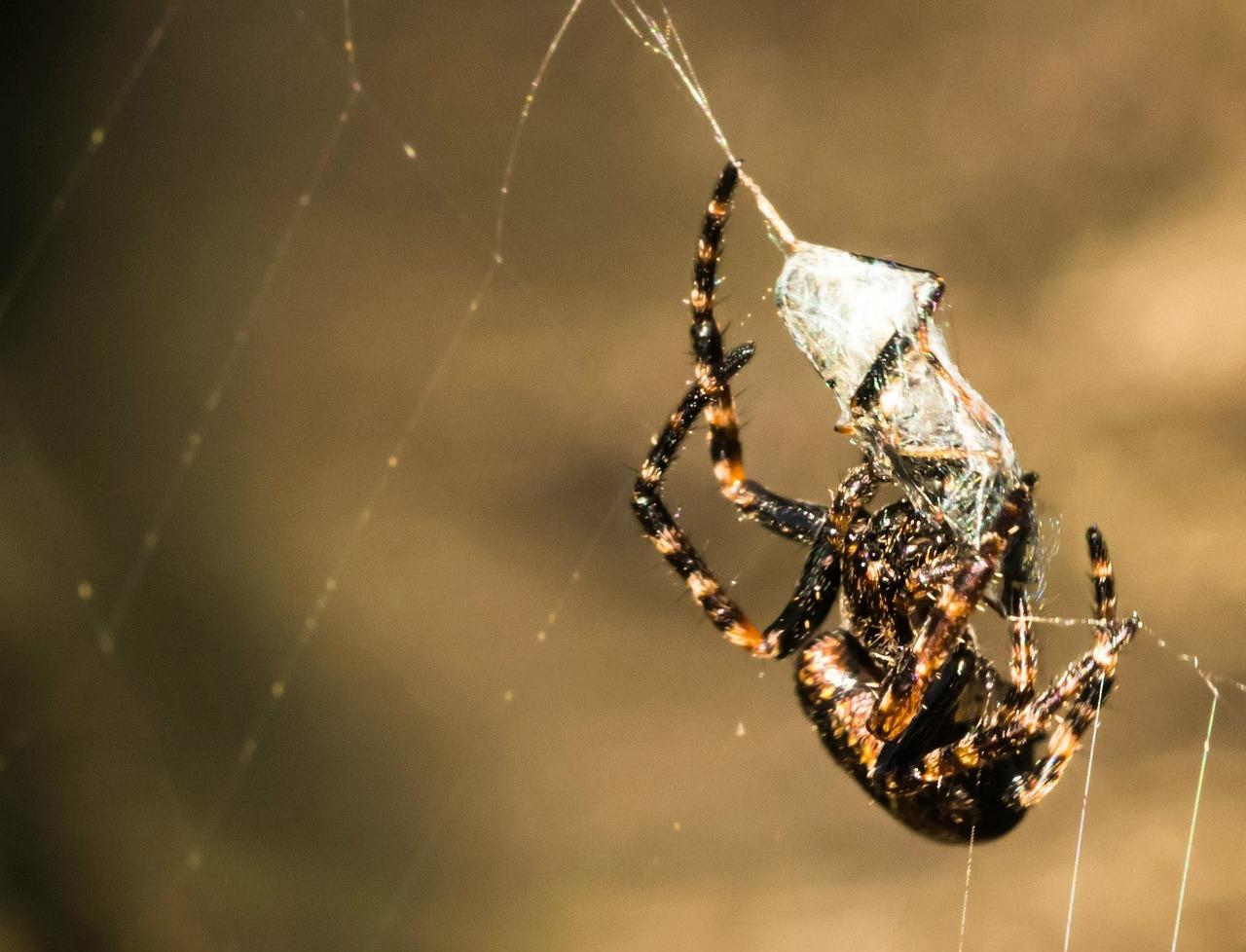Картинка поймала паука