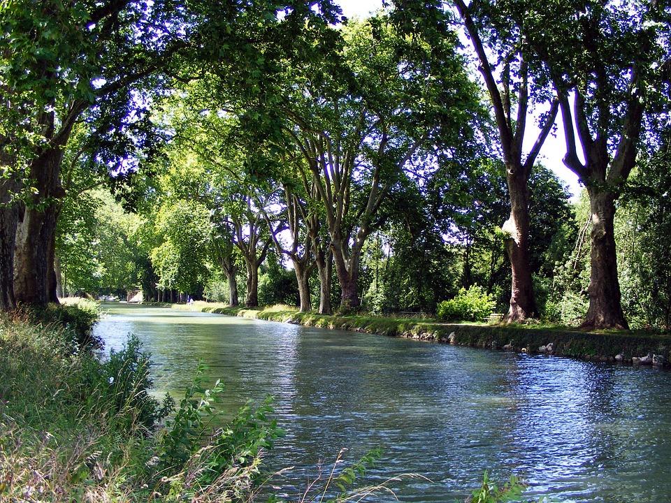 無料の写真: 川, チャネル, 木, ...