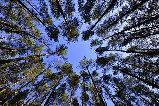 Forest, Trees, Tree Canopy, Foliage
