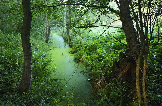 free photo  green  tree  forests  view  swamp - free image on pixabay
