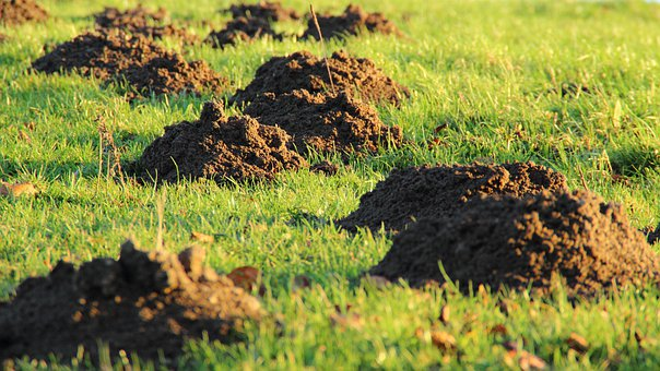 Molehill, Mole, Earth, Meadow, Rush