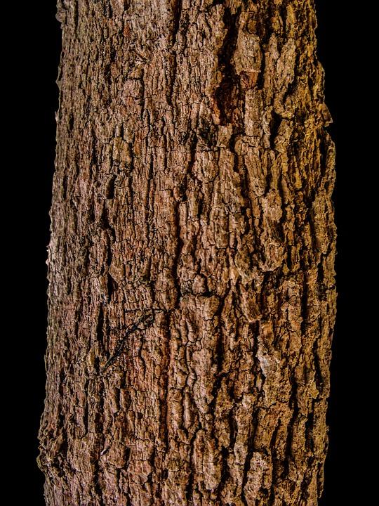 Super Borke Baumstamm Rinde - Kostenloses Foto auf Pixabay @DA_76