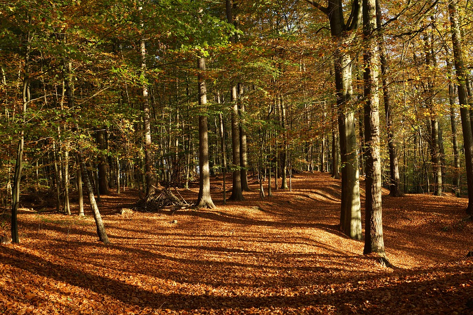 Free photo: Forest, Deciduous Forest, Trees - Free Image on ...