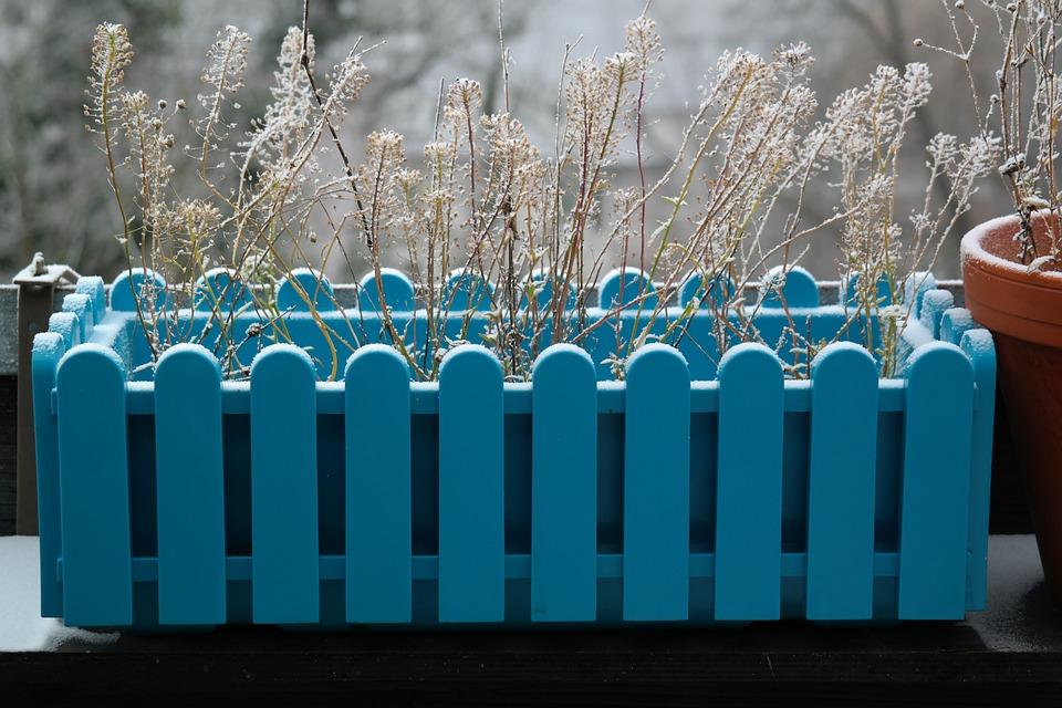 Jardiniere Fleurs Hiver Photo Gratuite Sur Pixabay