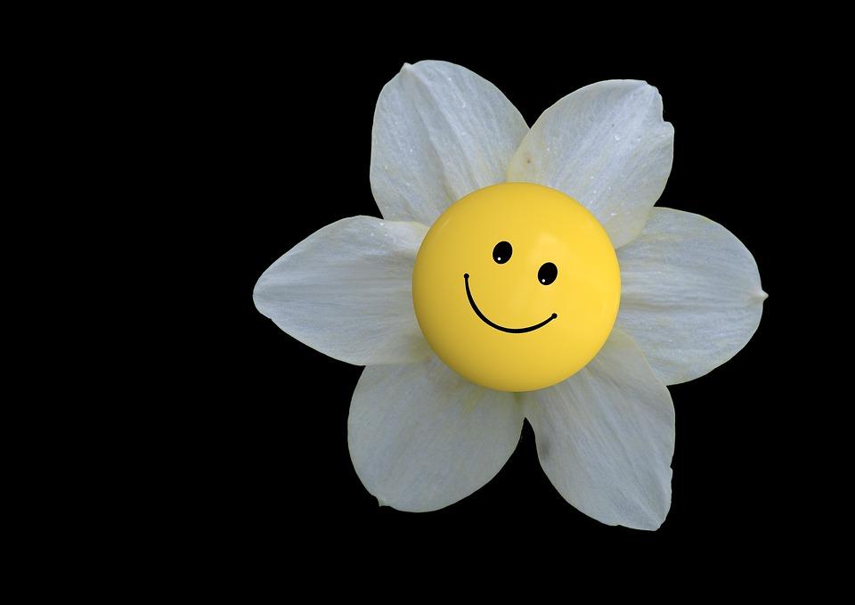 Blossom Bloom Flower Free Photo On Pixabay