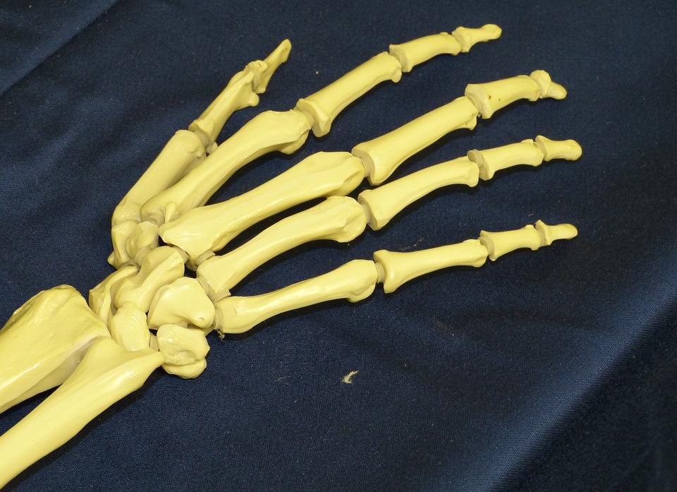 Mano Hueso Esqueleto · Foto gratis en Pixabay