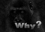 why, question, gorilla