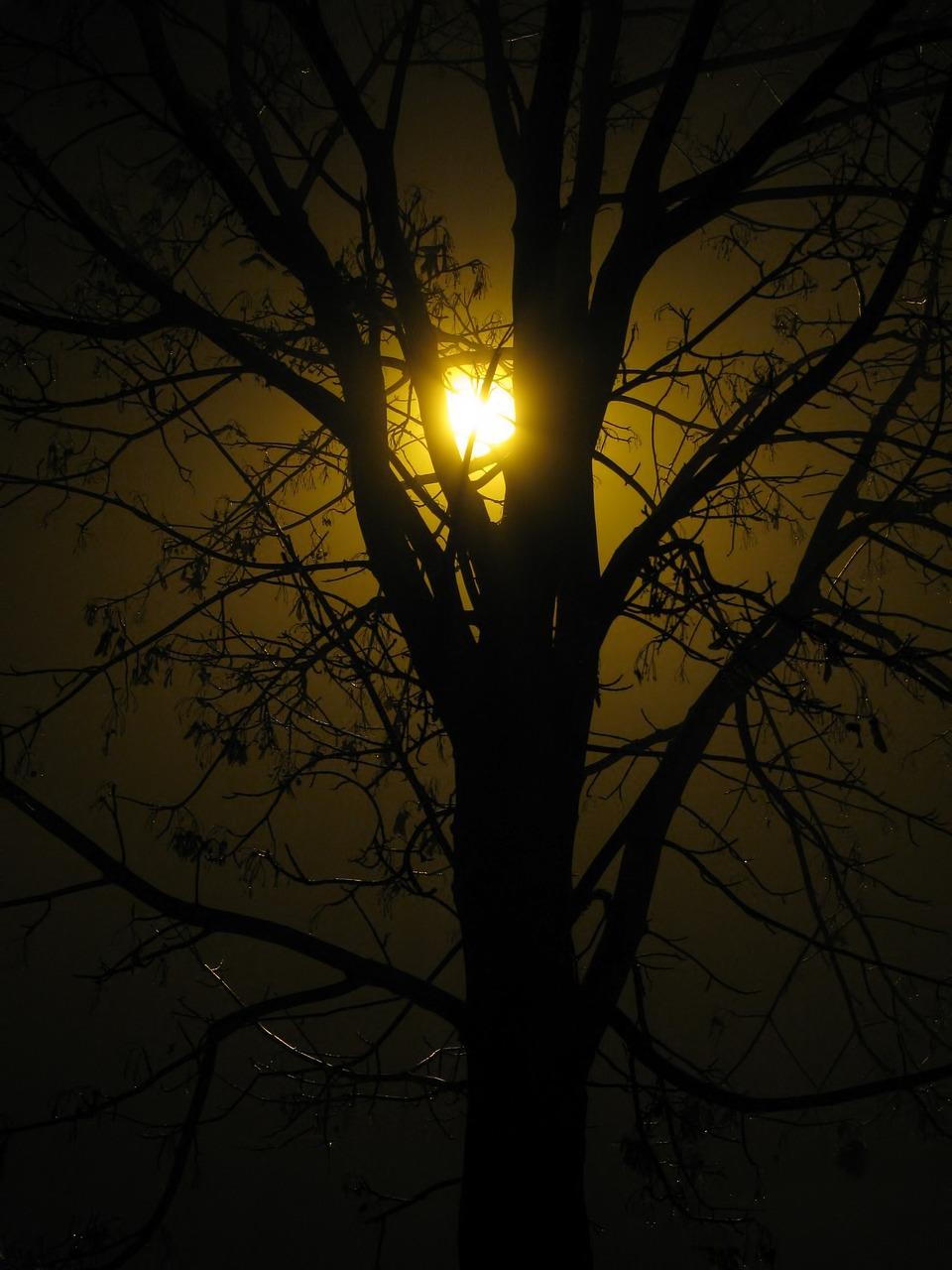 приложения, как, дерево фонарь картинки пристанище