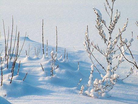 冬, 霜, 雪, 植物