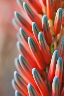 Flower, Plant, Tender, Fine, Blossom