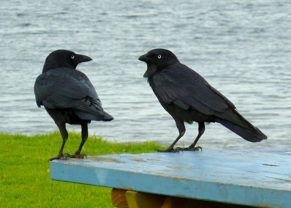 Las aves más glotonas
