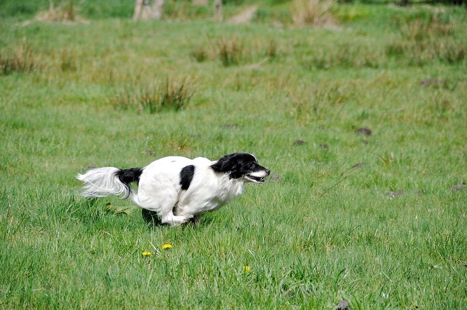 free photo dog small dog race   free image on pixabay