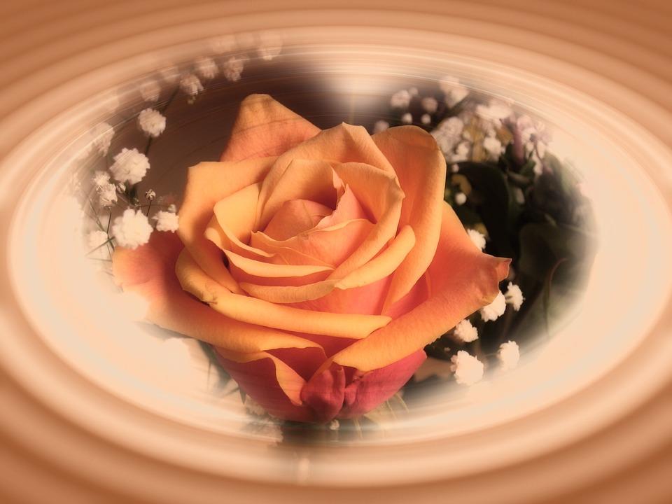 Mawar Bunga Jantung Bentuk Foto Gratis Di Pixabay